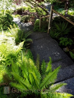 Ferns line the walkway.