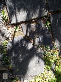 Pine needle shadows feather the ground.