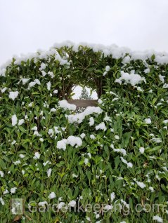 The hedge is still holding up.