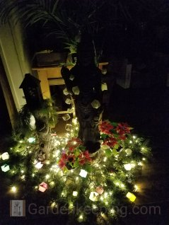 After the new Year, Kuan Yin got her own lights and greens.